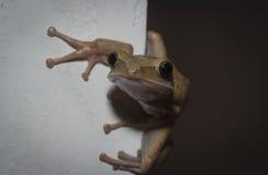 Βάτραχος που κρυφοκοιτάζει έξω από τη γωνία στοκ εικόνα