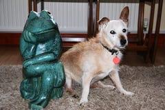 Βάτραχος & σκυλί Στοκ Εικόνες