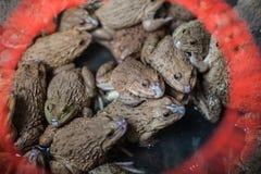 Βάτραχος στη λεκάνη για την πώληση Στοκ φωτογραφία με δικαίωμα ελεύθερης χρήσης