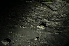 Βάτραχος στη νύχτα - σύνδεση Sukau Στοκ φωτογραφίες με δικαίωμα ελεύθερης χρήσης