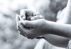 βάτραχος ταύρων στοκ φωτογραφία με δικαίωμα ελεύθερης χρήσης