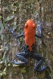 βάτραχος 04 Στοκ φωτογραφίες με δικαίωμα ελεύθερης χρήσης