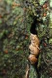 Βάτραχος Στοκ Φωτογραφία