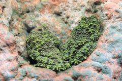 βάτραχος mossy στοκ εικόνες με δικαίωμα ελεύθερης χρήσης