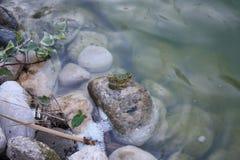 Βάτραχος Tekirova Στοκ φωτογραφίες με δικαίωμα ελεύθερης χρήσης