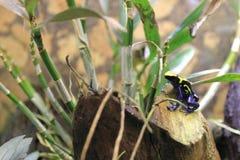βέλος που βάφει το βάτραχο Στοκ φωτογραφίες με δικαίωμα ελεύθερης χρήσης