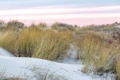 βήματα άμμου της Ρωσίας kurshskaya kosa οριζόντων αμμόλοφων που τεντώνουν στοκ φωτογραφία με δικαίωμα ελεύθερης χρήσης
