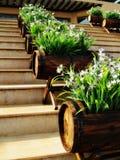 βήματα καλλιεργητών βαρελιών στοκ φωτογραφίες