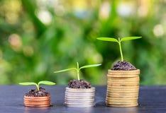 Βήματα νομισμάτων χρημάτων Επιχειρησιακή χρηματοδότηση και έννοια χρημάτων Στοκ Εικόνα