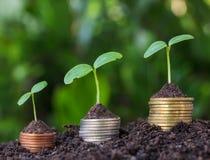 Βήματα νομισμάτων χρημάτων Επιχειρησιακή χρηματοδότηση και έννοια χρημάτων Στοκ εικόνα με δικαίωμα ελεύθερης χρήσης