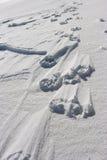 βήματα χιονιού σκυλιών Στοκ φωτογραφίες με δικαίωμα ελεύθερης χρήσης