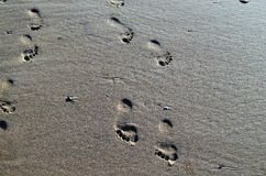 βήματα Στοκ φωτογραφία με δικαίωμα ελεύθερης χρήσης