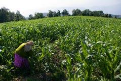 βήμα καλλιέργειας Στοκ εικόνες με δικαίωμα ελεύθερης χρήσης