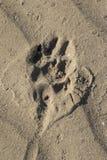 Βήμα ποδιών στην άμμο Στοκ φωτογραφία με δικαίωμα ελεύθερης χρήσης