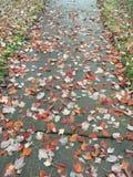 Βήμα στα διεσπαρμένα φύλλα στοκ εικόνες