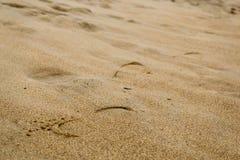 Βήμα στην υγρή άμμο Στοκ Φωτογραφίες