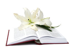 Βίβλος Στοκ Εικόνες