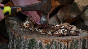 Βίντεο ραγίζοντας των παραδοσιακά καρυδιών απόθεμα βίντεο