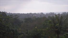 Βίντεο τροπικής και βροχής μουσώνα απόθεμα βίντεο