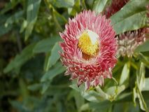 Βίντεο των μελισσών στα λουλούδια απόθεμα βίντεο