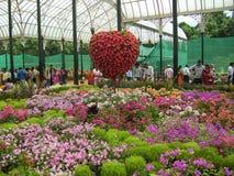 Βαγκαλόρη, Karnataka, Ινδία - 11 Αυγούστου 2008 τα ζωηρόχρωμα λουλούδια στο λουλούδι παρουσιάζουν στο βοτανικό κήπο Lalbagh Στοκ εικόνες με δικαίωμα ελεύθερης χρήσης