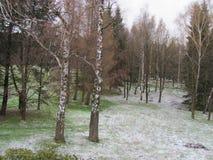 Βαθιά δάση στα βουνά Jeseniky και τα περίχωρά του στοκ φωτογραφία με δικαίωμα ελεύθερης χρήσης