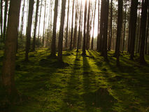 βαθιά δάση Στοκ φωτογραφίες με δικαίωμα ελεύθερης χρήσης
