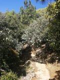 Βαθιά βουνά και δάση, το αρχικό οικολογικό περιβάλλον στοκ εικόνες