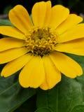 Βαθιά - κίτρινος στοκ εικόνα