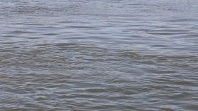 Βαθιά μπλε κύματα νερού λιμνών απόθεμα βίντεο