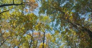 Βαθιά - πράσινα δασικά, πράσινα ξύλα φιλμ μικρού μήκους