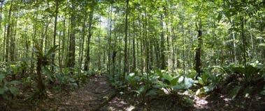 Βαθιά - πράσινο δάσος ζουγκλών στον άγγελο Salto, Canaima, Βενεζουέλα στοκ φωτογραφίες