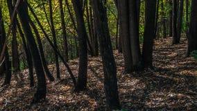 Βαθιά σκιά (πράσινη ημέρα) Στοκ εικόνες με δικαίωμα ελεύθερης χρήσης