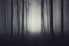 Βαθιά σκοτεινά ξύλα στη νύχτα αποκριών