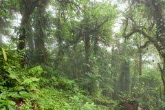 Βαθιά στο πολύβλαστο ομιχλώδες τροπικό δάσος Στοκ εικόνα με δικαίωμα ελεύθερης χρήσης