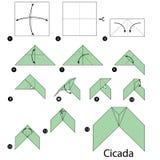 Βαθμιαία οδηγίες πώς να κάνει το origami Cicada διανυσματική απεικόνιση