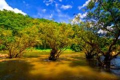 βαθύς δασικός ταϊλανδικός καταρράκτης πάρκων βουνών εθνικός Στο βαθύ δάσος Στοκ Φωτογραφία