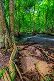 βαθύς δασικός ταϊλανδικός καταρράκτης πάρκων βουνών εθνικός Στο βαθύ δάσος Στοκ Εικόνα