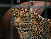 βαθύς ζωολογικός κήπος & Στοκ εικόνες με δικαίωμα ελεύθερης χρήσης