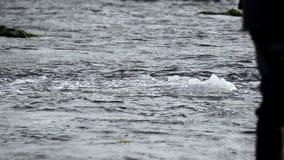 Βαθύς ωκεανός φυσικού αερίου fron de φιλμ μικρού μήκους