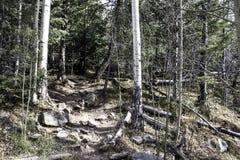 Βαθύτερος στο δάσος στοκ φωτογραφία