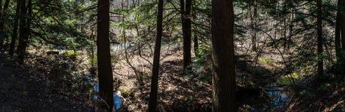 Βαθύ δάσος Στοκ φωτογραφία με δικαίωμα ελεύθερης χρήσης