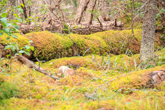 Βαθύ δασικό πάτωμα το φθινόπωρο Στοκ Εικόνα