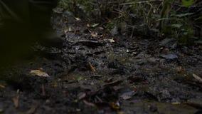 Βαθύ δάσος φιλμ μικρού μήκους