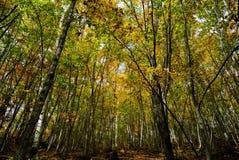 βαθύ δασικό τοπίο φθινοπώρ&o Στοκ Φωτογραφία