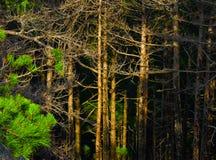 Βαθύ ξύλο Στοκ Εικόνες