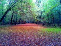 Βαθύ τσεχικό δάσος φθινοπώρου στοκ εικόνες με δικαίωμα ελεύθερης χρήσης