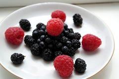 βακκίνια σμέουρων μουριών σε ένα πιάτο Στοκ εικόνες με δικαίωμα ελεύθερης χρήσης
