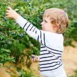 Βακκίνιο επιλογής μικρών παιδιών στο οργανικό μόνο αγρόκτημα επιλογών Στοκ εικόνες με δικαίωμα ελεύθερης χρήσης