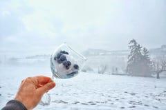 Βακκίνιο στο χιόνι στοκ εικόνες